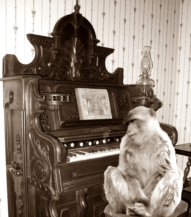 Picture of a monkey sitting in front of an old style organ quickly Photo-shopped by Stephen Hart of Edenchanges!